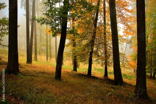 Canvas Prints Autumn Morning summer forest with sun rays.