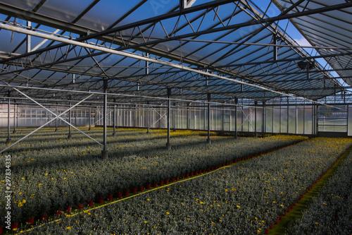 Photo Albenga. Serra di piante in vaso 4. 2013