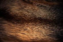 Luxury Fox Fur Fabric Texture With Multicolor Reflections Over Surface