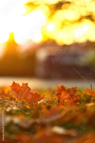 Campagne Buntes Laub im Herbst, goldene Blätter am Abend bei Sonnenschein im Gegenlich