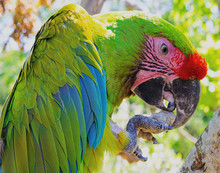 Colorful Parrot Holding Rock With Its Foot