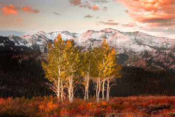 Fresh autumn snow and aspens in the Wasatch Mountains, Utah, USA.