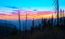 Yosemite Burned Area At Sunset