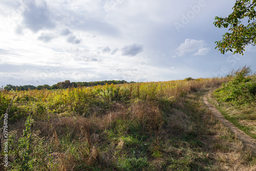 Landscape fields meadow near Auvers-sur-Oise village, France Canvas Print