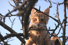 Small Red Cat On A Tree