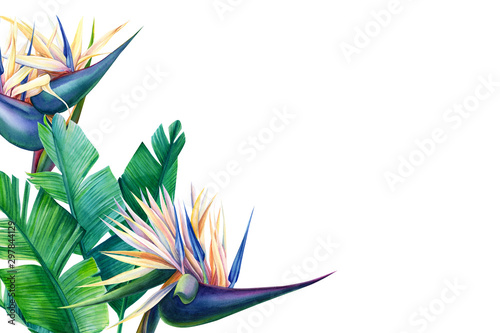 greeting card with place for text, tropical strelitzia flowers on a white backgr Wallpaper Mural