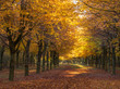 Footpath in autumn with bright weather and brown leaves at the trees