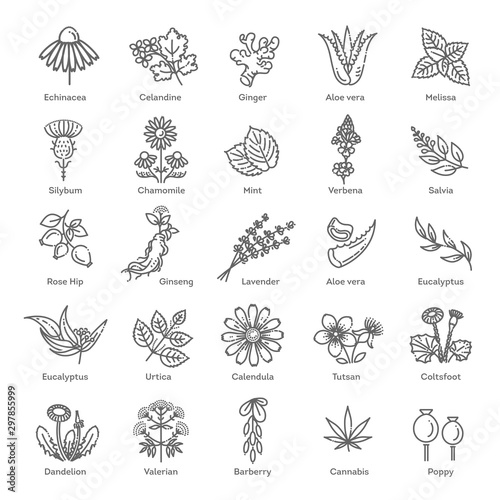 Fototapeta Herbs collection. Medical healthy flowers and herbs nature plants obraz