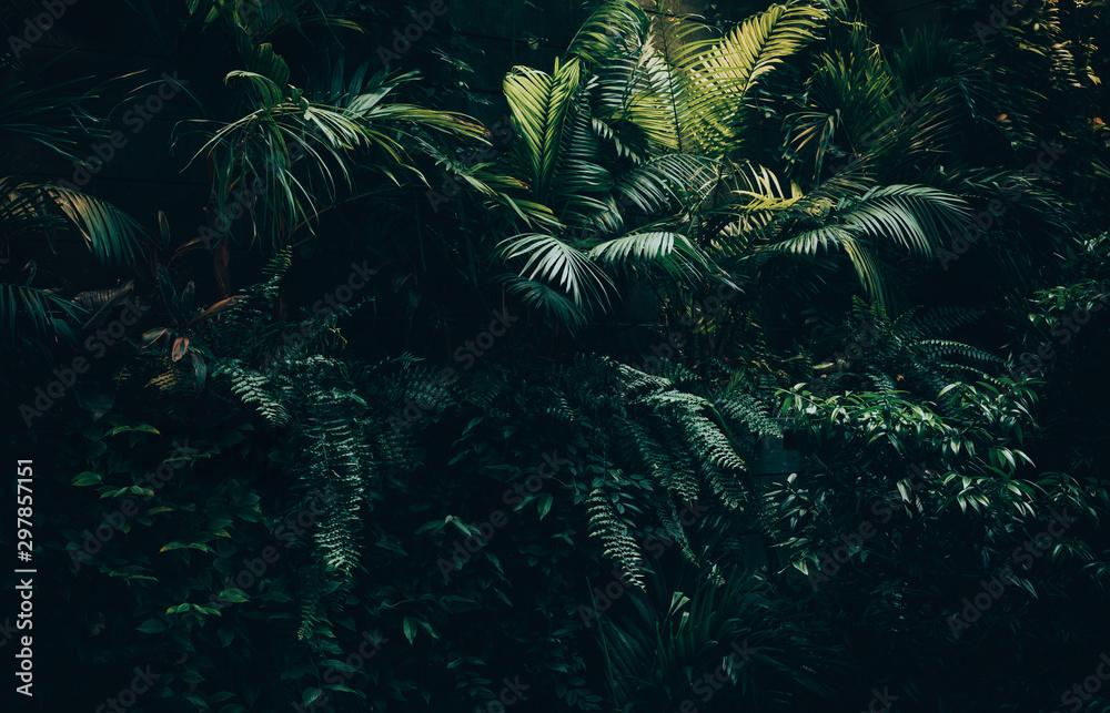 Fototapeta Tropical leaves background,jungle leaf garden