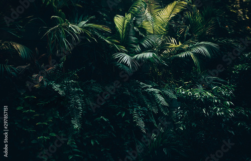 Tropical leaves background,jungle leaf garden