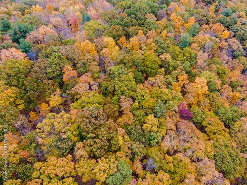 Obraz na plátne Drone photo of peak foliage upstate New York during the autumn fall season