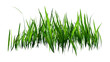 3D Rendering Patch of Grass