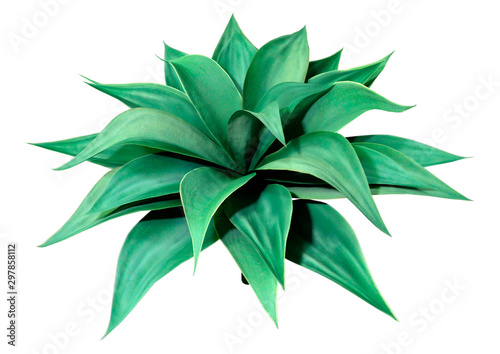 3D Rendering Agave Plant on White Canvas Print