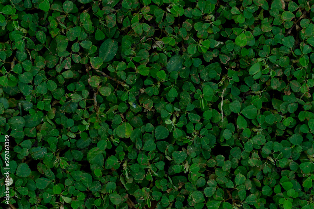 Fototapety, obrazy: The top of the round green leaf grass for background and textured.