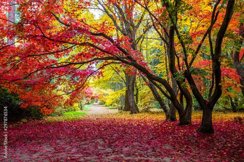 aleja-w-parku-z-kolorowymi-liscmi