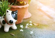 Porcelain Smile Dog In The Gar...