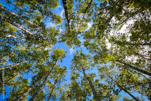 Looking up to the sky in the forest