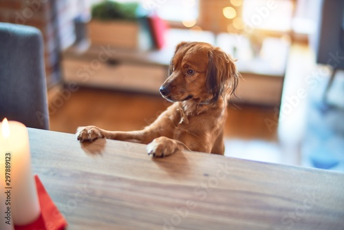 Obraz Adorable dog on table at home - fototapety do salonu