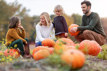 Happy Young Family In Pumpkin ...