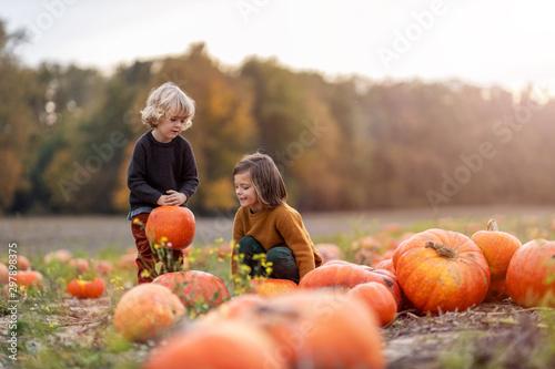 Two little boys having fun in a pumpkin patch Fototapete