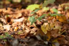 Berlin Herbstlicher Waldboden