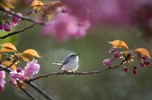 A Blue-gray Gnatcatcher Perche...