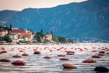 Oyster Farms In The Kotor Bay,...