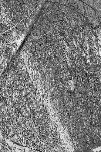Photo Embossed Sunbeam Through Wispy Tree Branches, Lake Chickamauga, Harrison Bay Sta