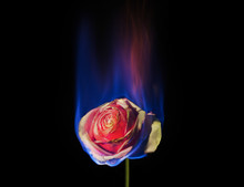Burning Flower, Flower On Fire...