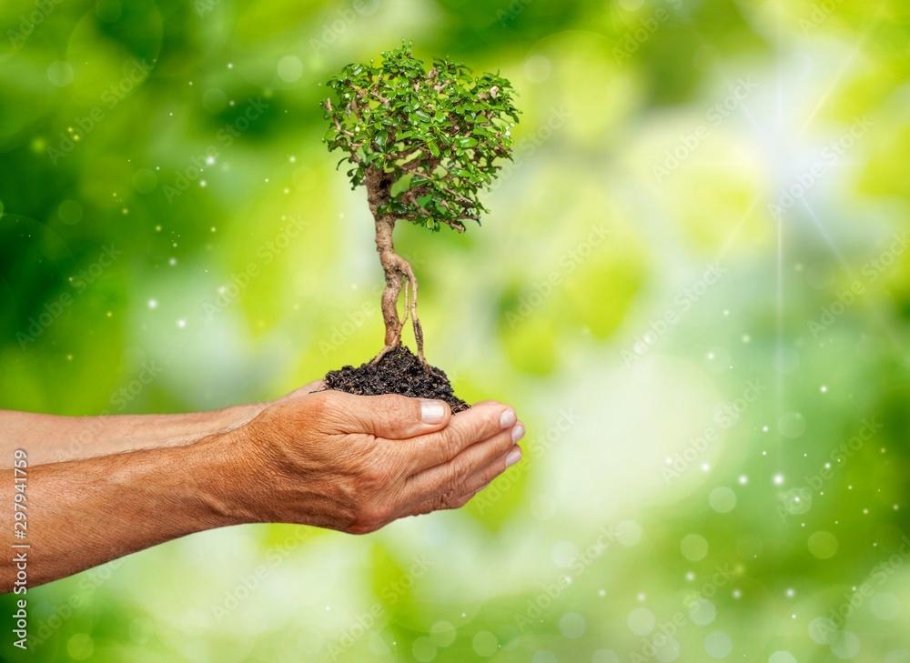 Fototapety, obrazy: Tree.