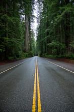 Wet Road Cuts Through Redwood ...
