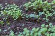 multi-plant shoots - closeup