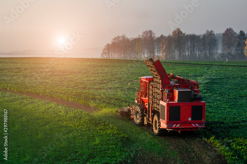Fotomural  Harvesting beet harvester in the field early in the morning