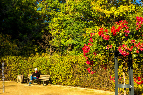 Wall Murals Roe Lady reads a book sitting on a bench of a public park during a sunny autumn afternoon.