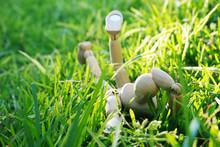 Manikin Laying On Grass Thinking/wondering