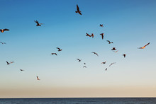 Flock Of Seagulls Flying In Th...