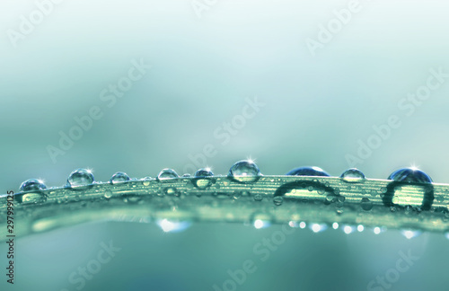 Foto Transparent drops of water dew on grass close up