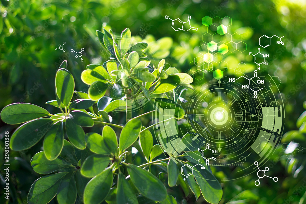 Fototapety, obrazy: Biology laboratory nature and science, Plants with biochemistry structure on green background.