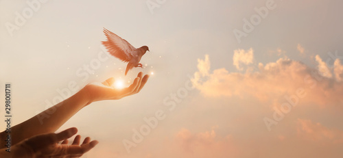 Leinwand Poster Woman praying and free bird enjoying nature on sunset background, hope concept