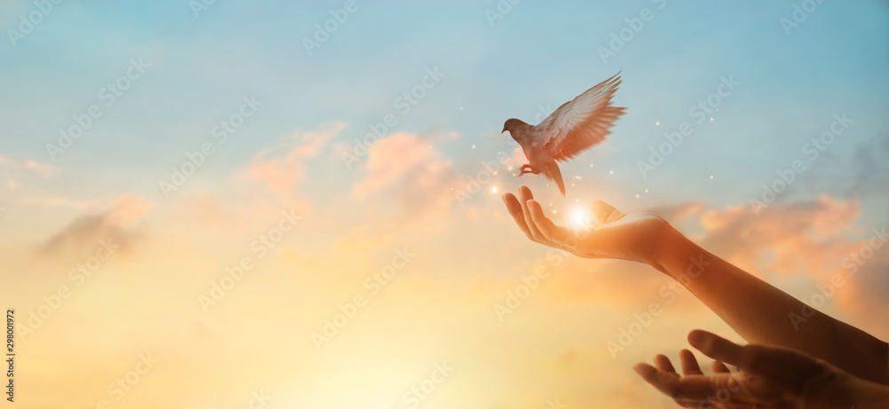 Fototapety, obrazy: Woman praying and free bird enjoying nature on sunset background, hope concept