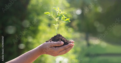 Fotografie, Obraz  Hands holding young plants sprouting and growing on green nature background, Earth Day, new life growth ecology and business financial progress concept