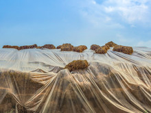 Natural Straw Covered By Plast...