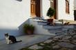 Gepflasterte gemütliche enge kleine Gasse mit Katzen, Kirche und Gebäuden in blau weiß weiss in Griechenland