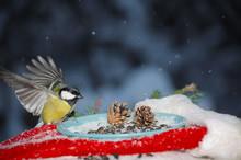Bird In A Feeder With Sunflowe...