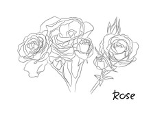 Black And White Floral Vector Set. Isolated Hand Drawn Black Contours Of Rose Flowers On White Background. Ornate Template For Design, Coloring Page.