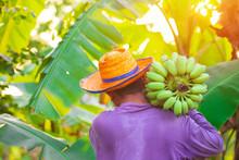 Farmer Bearing Banana In An Or...
