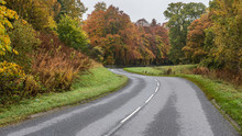 Autumn Colours On Winding Road