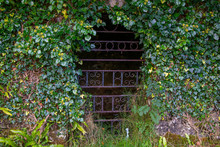 An Overgrown Wrought Iron Gate...