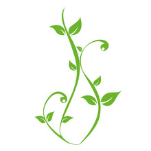 Green Plants Tendril On White Background Vector Illustration EPS10