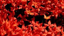 Red Needle Flower, Flower Bloo...